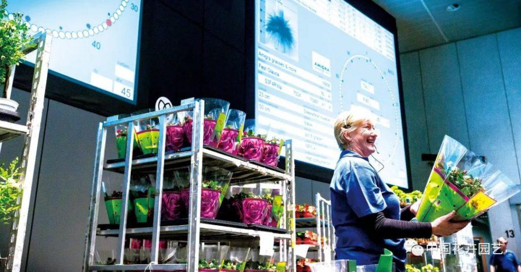 荷兰花卉拍卖