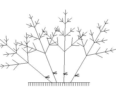 北方地区如何培育市场需要的丛生苗?