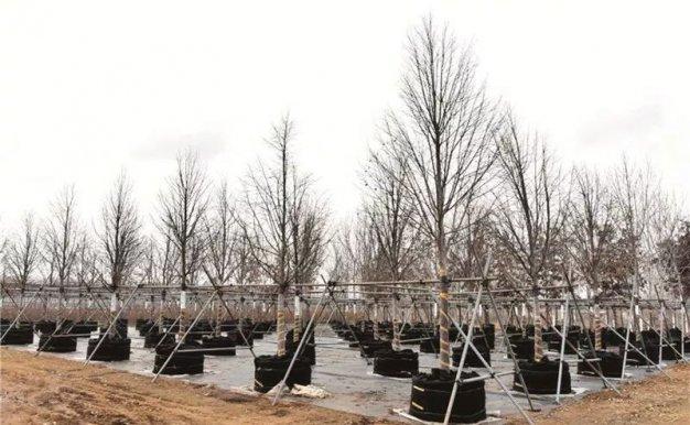 北方苗圃冬季如何管护