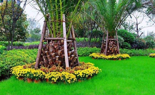 植物的力量 | 绿色植物为环境和健康发挥积极作用(一)城市住宅篇