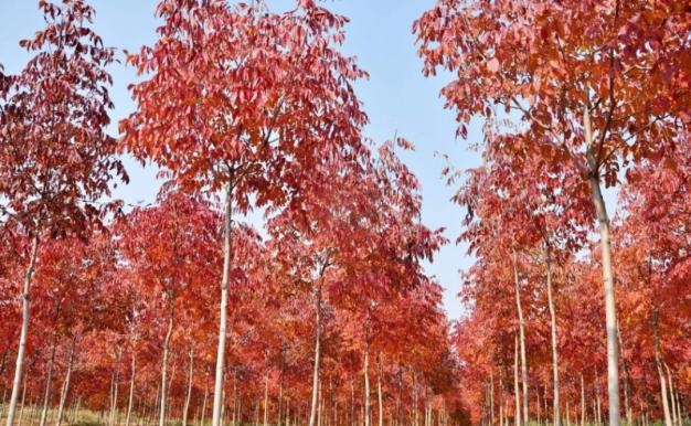 《2021年度全国苗木供需分析报告》出炉