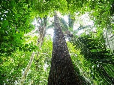 自然的力量   森林篇