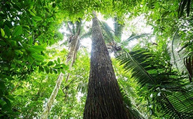 自然的力量 | 森林篇